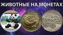 Видео: Животные на монетах мира